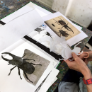 category_adult-printmaking